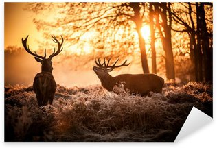 Red Deer in Morning Sun. Sticker - Pixerstick