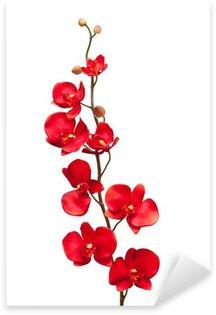 Red orchid flower on white background Sticker - Pixerstick