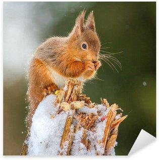 Sticker Pixerstick Red Squirrel alimentation dans la forêt anglais