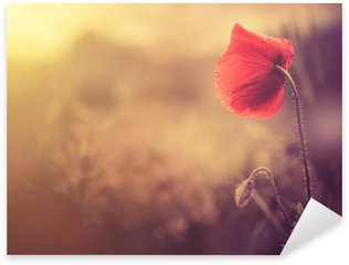 Sticker Pixerstick Sauvage de fleur de pavot