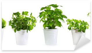 Pixerstick for All Surfaces set of potted green plants