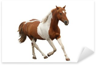 Sticker - Pixerstick Skewbald pony galloping isolated on white