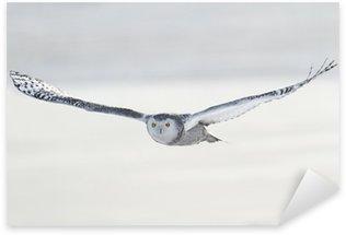 Sticker Pixerstick Snowy Owl - Bubo Scandiacus