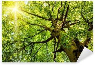Sticker Pixerstick Soleil brillant à travers les branches d'arbre