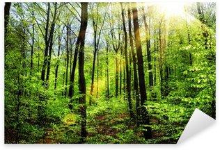 Sticker Pixerstick Soleil de printemps dans la forêt de hêtres