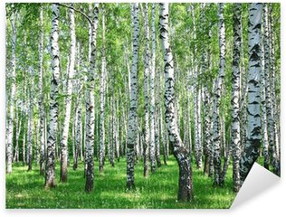 Spring birch forest with fresh greens Sticker - Pixerstick
