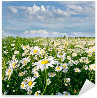 Pixerstick for All Surfaces Springtime: field of daisy flowers with blue sky and clouds