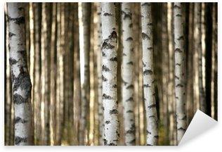 Pixerstick Sticker Stammen van berkenbomen