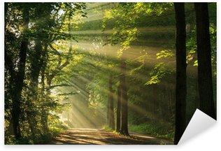 Pixerstick Sticker Stralen van de zon schijnt door de bomen in het bos.