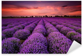 Sticker - Pixerstick Stunning landscape with lavender field at sunset