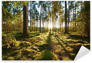 Pixerstick Sticker Sunrise in een dennenbos
