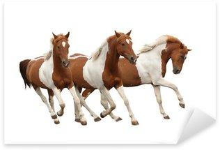 Sticker - Pixerstick Three skewbald horses galloping isolated