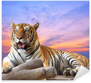 Sticker - Pixerstick Tiger looking something on the rock with beautiful sky at sunset