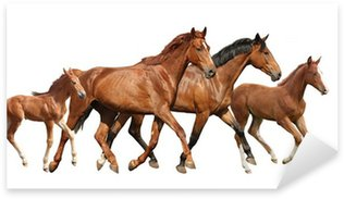 Sticker - Pixerstick Two brown horses and two little foals family running free
