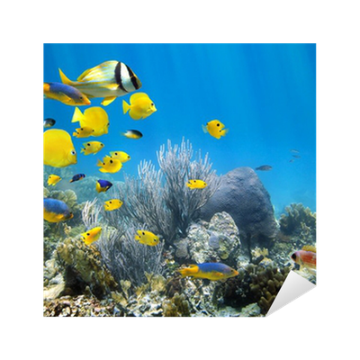 Underwater coral reef with school of fish Sticker • Pixers ...