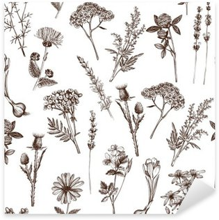 vector seamless pattern with ink hand drawn medicinal herbs sketch Pixerstick Sticker