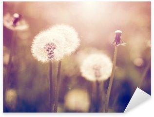 Vintage dandelions on meadow Sticker - Pixerstick