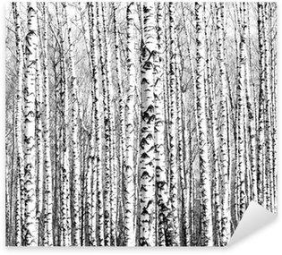 Pixerstick Sticker Voorjaar stammen van berken zwart en wit