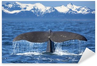 Pixerstick for All Surfaces Whale tail