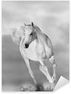 Sticker - Pixerstick white arabian horse