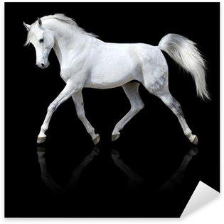 Sticker - Pixerstick white horse runs trot isolated on black