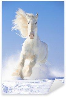 Sticker - Pixerstick White horse stallion runs gallop in front focus