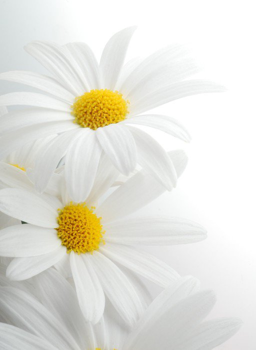 Sticker - Pixerstick white spring marguerite - Themes