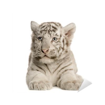 White Tiger cub (2 months) Sticker • Pixers® • We live to ...