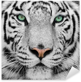 white tiger Sticker - Pixerstick
