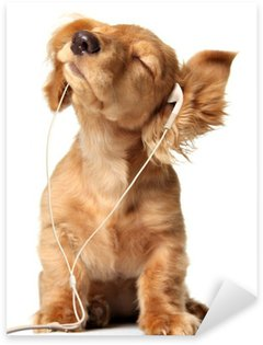 Young puppy listening to music on a head set. Sticker - Pixerstick