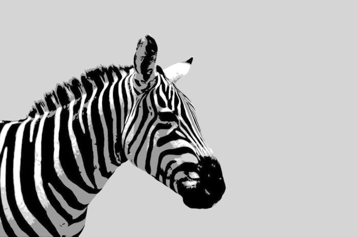 Sticker - Pixerstick zebra illustration - Styles