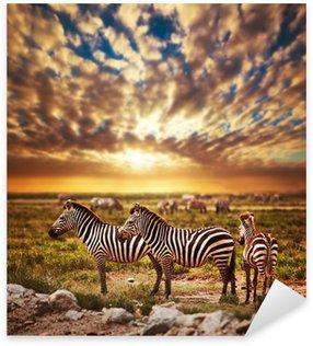 Sticker - Pixerstick Zebras herd on African savanna at sunset. Safari in Serengeti