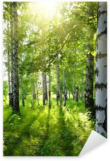 Pixerstick Sticker Zomer berkenbossen met zon