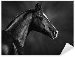 Pixerstick Sticker Zwart-wit portret van de Arabische hengst