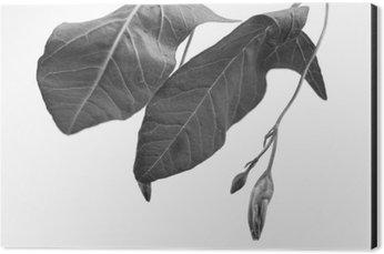 Tableau Alu-Dibond Macrograph noir et blanc de l'objet de la plante avec la profondeur de champ