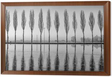 Tableau en Cadre Alberi riflessi sul lago all'alba in bianco e nero