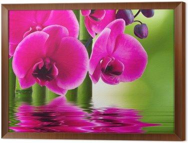 Tableau en Cadre Fleur d'orchidée avec le bambou et la réflexion dans l'eau