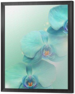 Tableau en Cadre Fleur d'orchidée fond