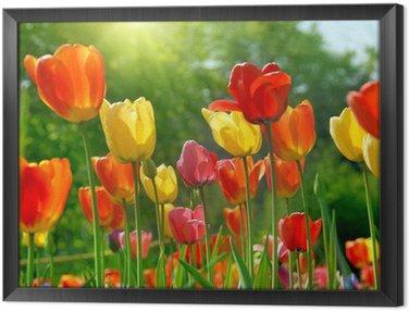 Tableau en Cadre Fleurs printanières