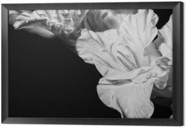 Tableau en Cadre Glaïeul Noir et blanc