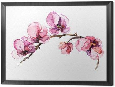 Tableau en Cadre L'aquarelle fleurs orchidée isolé sur le fond blanc
