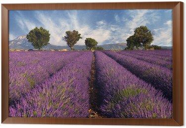 Tableau en Cadre Lavender field in Provence, France