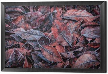 Tableau en Cadre Les feuilles d'automne recouvertes de givre - fond