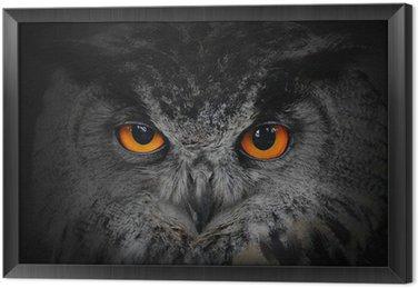Tableau en Cadre Les yeux maléfiques. (Eagle Owl, Bubo bubo).