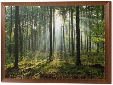 Tableau en Cadre Matin dans la forêt