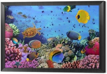 Tableaux sur toile aquarium pixers nous vivons pour for Aquarium cadre