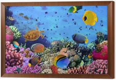 Tableau en Cadre Photo d'une colonie de corail