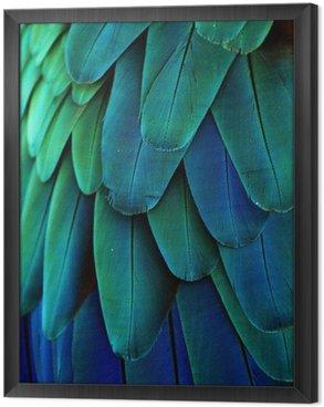 Tableau en Cadre Plumes d'ara (bleu / vert)