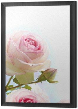Tableau en Cadre Rose rose sur fond blanc bleu