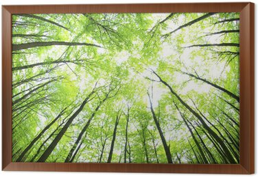 Tableau en Cadre Vert et foret